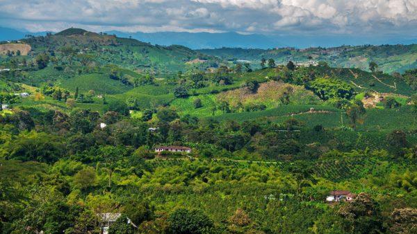 viaggio in colombia cultura caffè